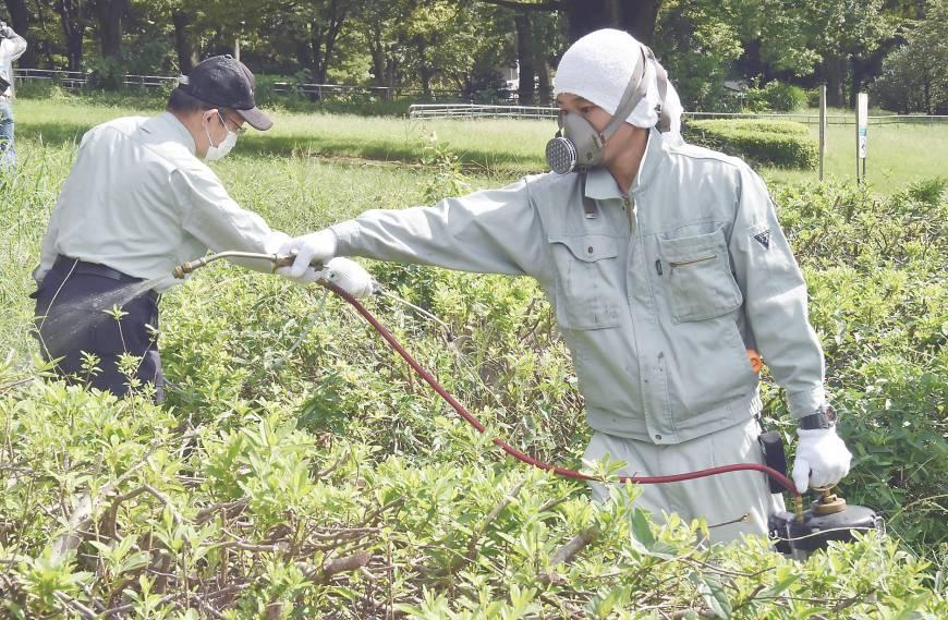 Fumigacion Dengue Japon